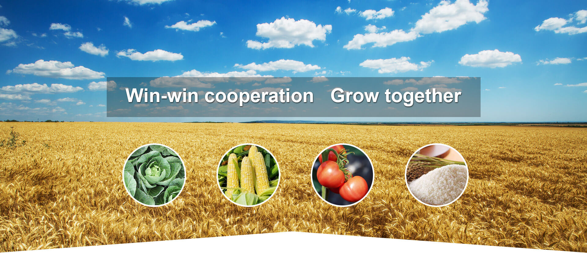 Win-win cooperation Grow together
